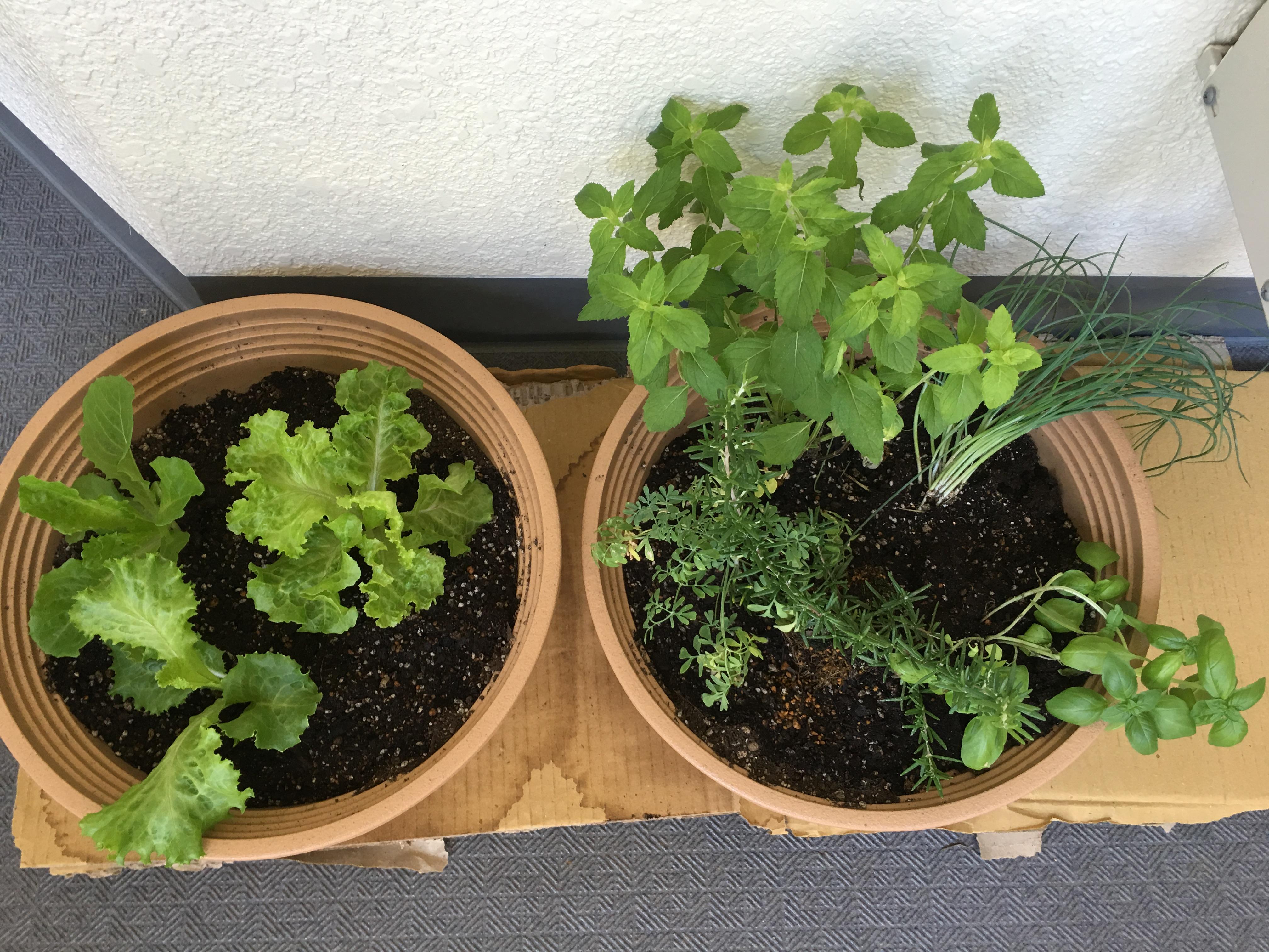 plantdisplay
